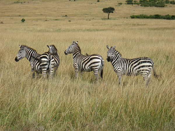 7 masai mara Seven Camping Wonders of the World