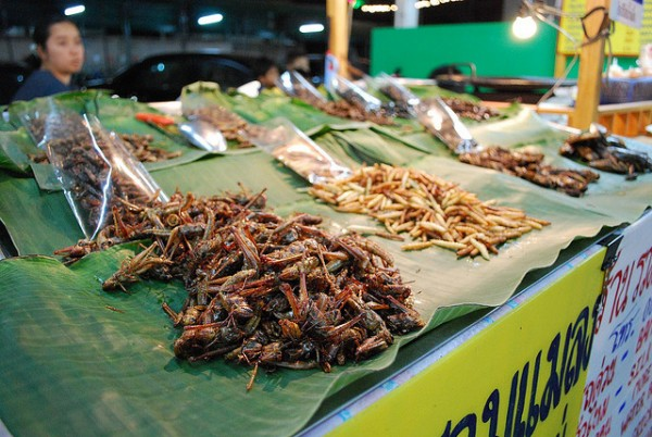 Crickets e1345652115468 50 Foods to Try Before you Die