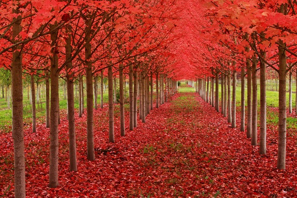 Hello Autumn: 10 Fantastic Fall Breaks
